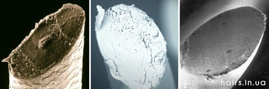 Фото острых кончиков волос под микроскопом